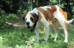 Dog Stock 215