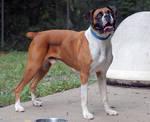 Dog Stock 226