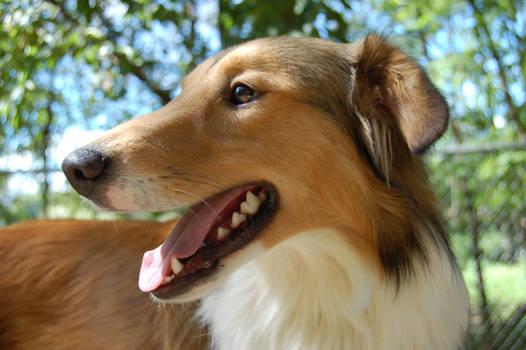 Dog Stock 242
