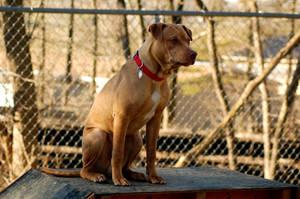 Dog Stock 287 by Jaded-Night-Stock