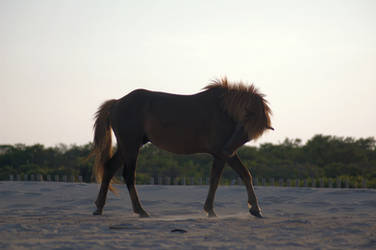 Horse Stock 11 by Jaded-Night-Stock