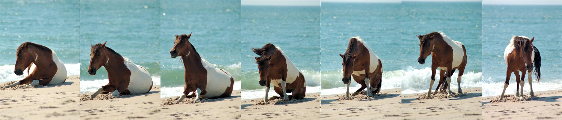 Horse Stock 14 by Jaded-Night-Stock