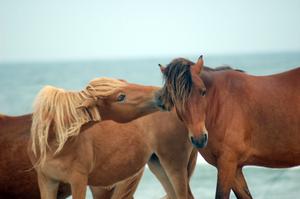 Horse Stock 23 by Jaded-Night-Stock