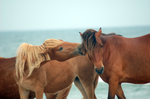 Horse Stock 23