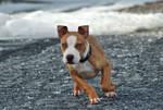 Dog Stock 360
