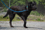 Dog Stock 369