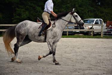 Horse Riding Stock 02