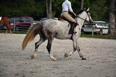 Horse Riding Stock 03
