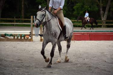 Horse Riding Stock 04