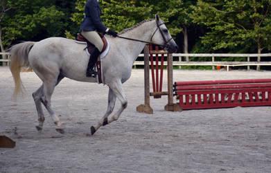 Horse Riding Stock 05
