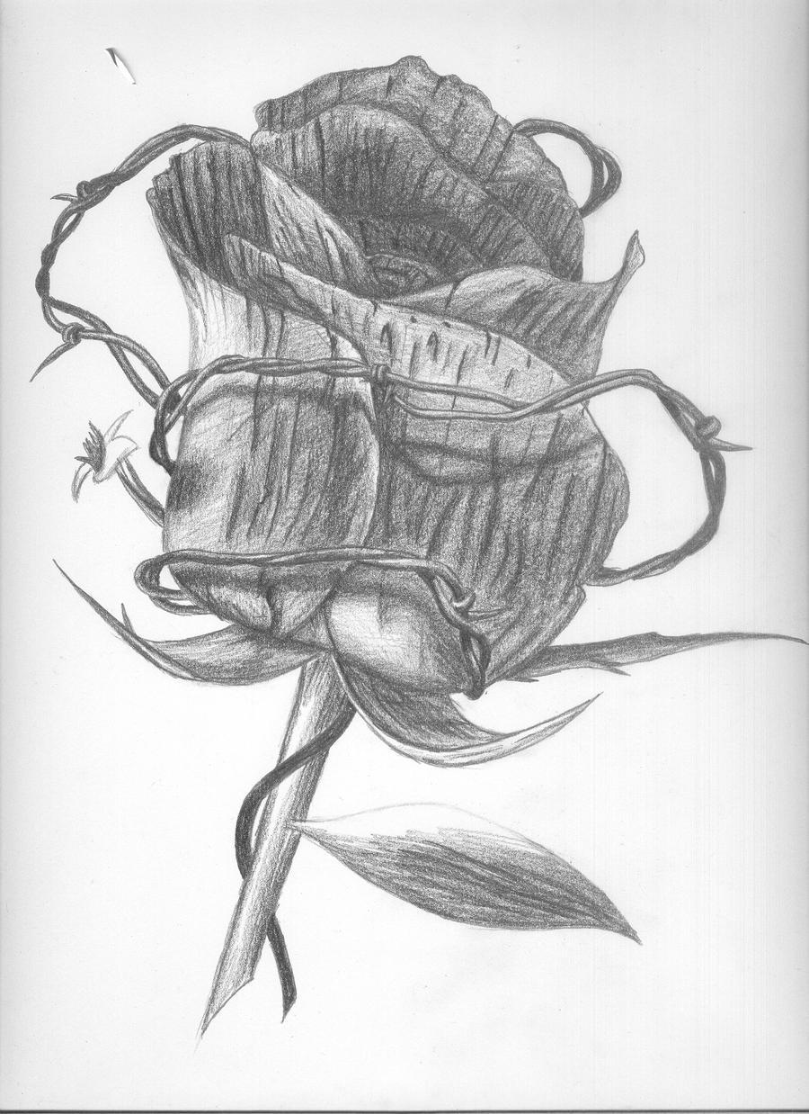 Barbed wire rose by argokaup on deviantart