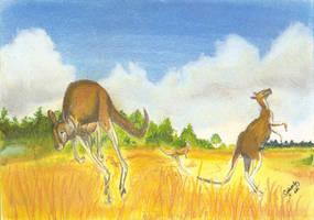 kangaroos by GregoryFerreira