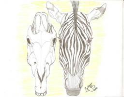 Zebra  by GregoryFerreira