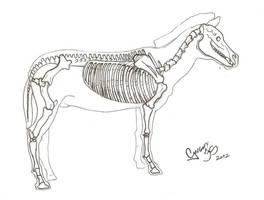Zebra skeleton  esqueleto by GregoryFerreira