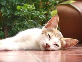Sleepy by XaliberDeathlock