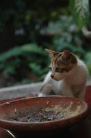 Where's My Food? by XaliberDeathlock