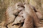 Mongoose 03