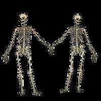 Skeleton Vision