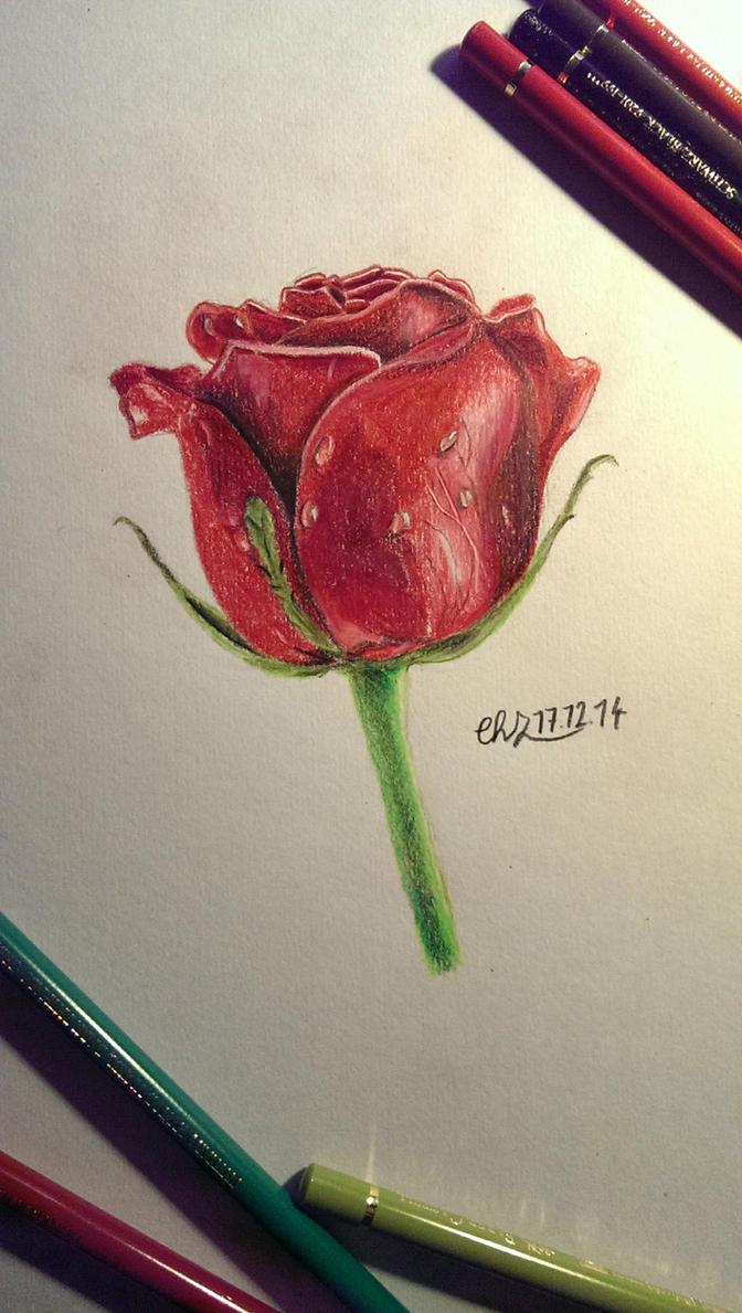 red rose by z3ttchr1