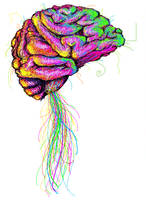 The Human Brain by TOMMYtheSQUID