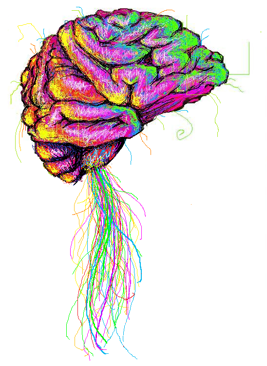 The human brain by tommythesquid on deviantart