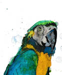 Blue and Gold Macaw (Watercolor) - Finished