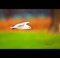 Glide by q-118