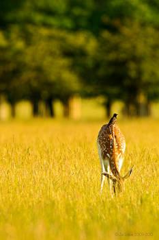 Starling Deer