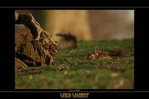 Wild Wabbit by q-118
