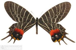 butterfly 2 by kayne-stock