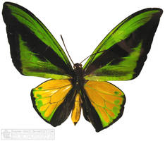 butterfly 3 by kayne-stock