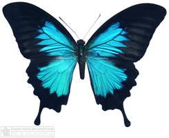 butterfly 4 by kayne-stock