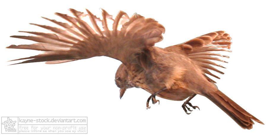 Humming Bird by kayne-stock