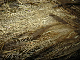 Emu Feathers Macro by kayne-stock