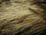 Emu Feathers Macro