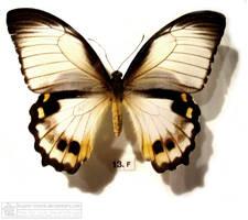 butterfly 5 by kayne-stock