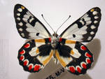 butterfly 8 by kayne-stock