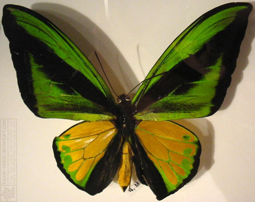 butterfly 10 by kayne-stock