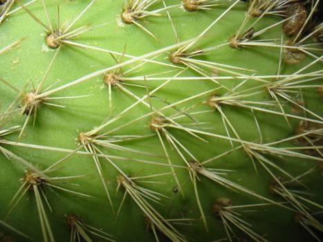 spikey cactus macro
