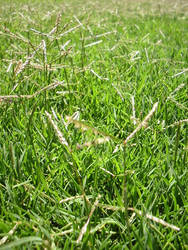 green green lawn