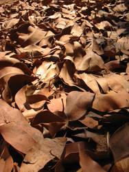 dry eucalyptus leaves