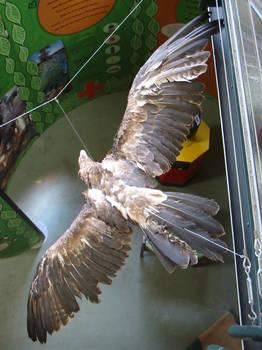 stuffed eagle flying