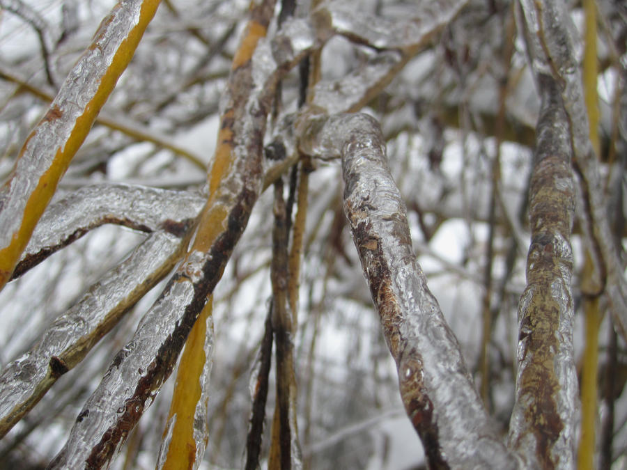 Icy Willow