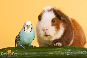 two cucumber friends