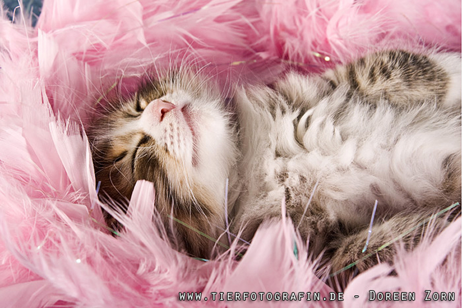 Pinky dreams :-) by Kirikina