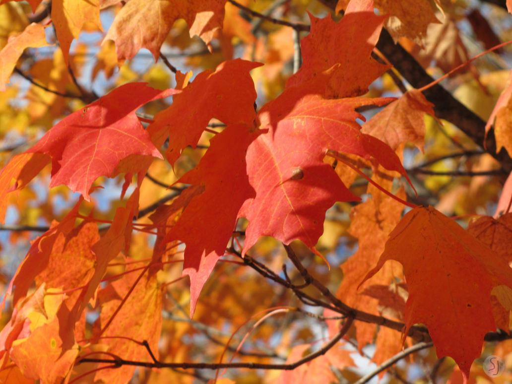 Fall Foliage Close-up by KamiMusubi
