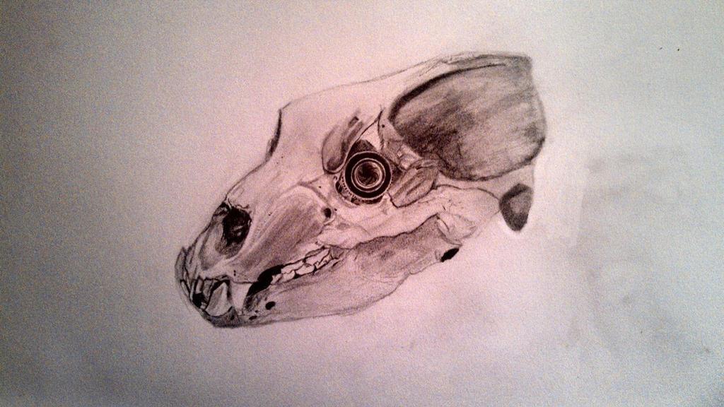 Bear Skull tattoo by sketchesnstuff on DeviantArt