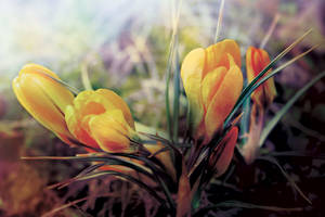 First Spring Flower | SPRING 2012 collection by weronicamc