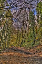 Muddy pretty path