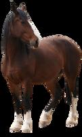 Bay Horse Pre-Cut